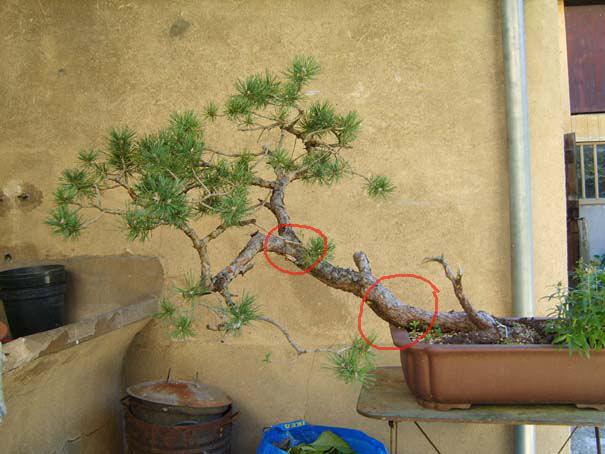 http://www.espritsdegoshin.fr/components/com_agora/img/members/70509_S8001947.jpg