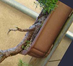 http://www.espritsdegoshin.fr/components/com_agora/img/members/70510_Image1.jpg
