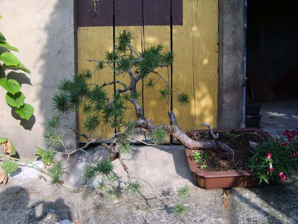http://www.espritsdegoshin.fr/components/com_agora/img/members/70524_S8001976.jpg
