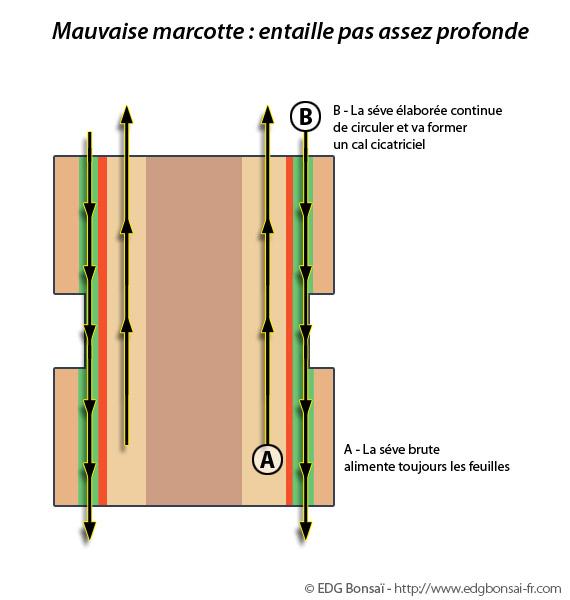 http://www.espritsdegoshin.fr/components/com_agora/img/members/71703_marcotte4.jpg