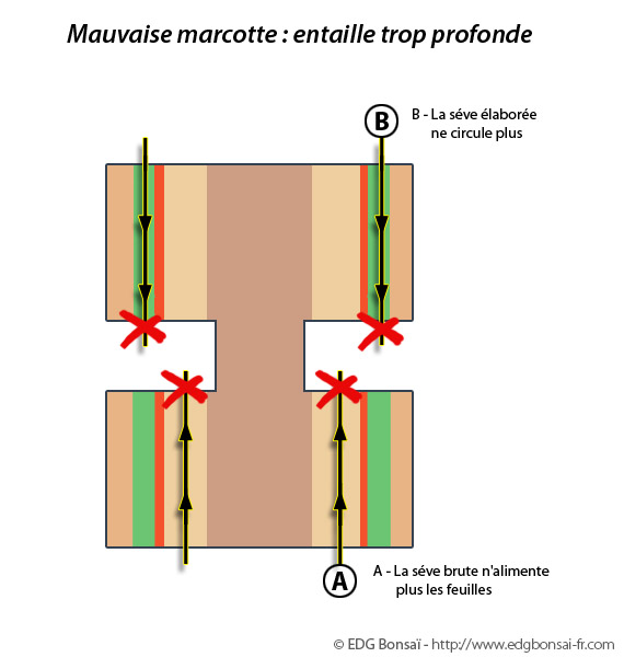 http://www.espritsdegoshin.fr/components/com_agora/img/members/71704_marcotte5.jpg