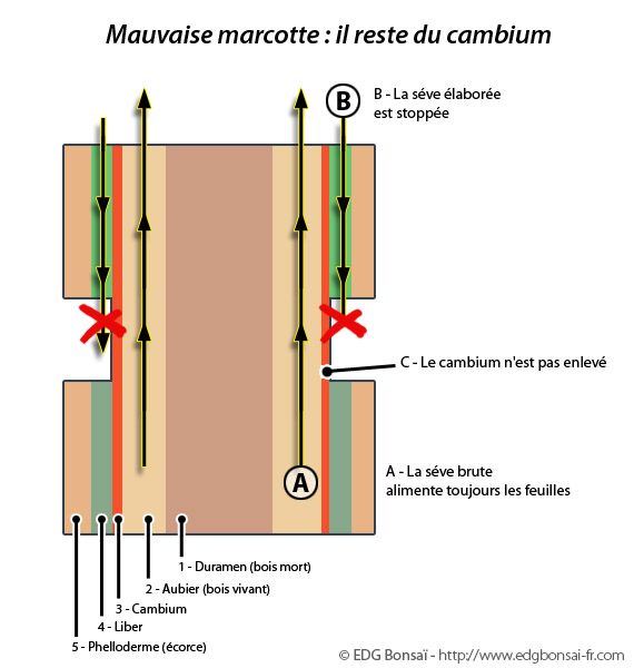 http://www.espritsdegoshin.fr/components/com_agora/img/members/71705_marcotte6.jpg