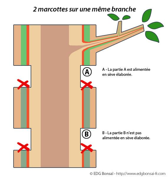 http://www.espritsdegoshin.fr/components/com_agora/img/members/71713_marcotte7.jpg