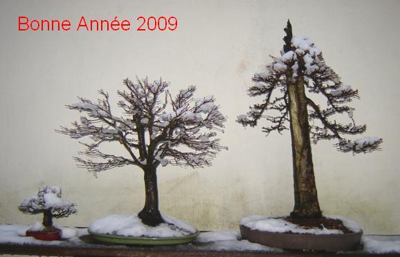 http://www.espritsdegoshin.fr/components/com_agora/img/members/73823_ARBRE_0042009.JPG