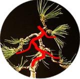 http://www.espritsdegoshin.fr/components/com_agora/img/members/77556_Image1.jpg