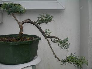 http://www.espritsdegoshin.fr/components/com_agora/img/members/79138_juniperus.JPG