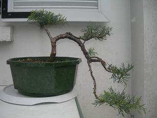 http://www.espritsdegoshin.fr/components/com_agora/img/members/79141_juniperus3.JPG