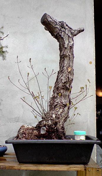 http://www.espritsdegoshin.fr/components/com_agora/img/members/79277_Quercus_Automne.jpg