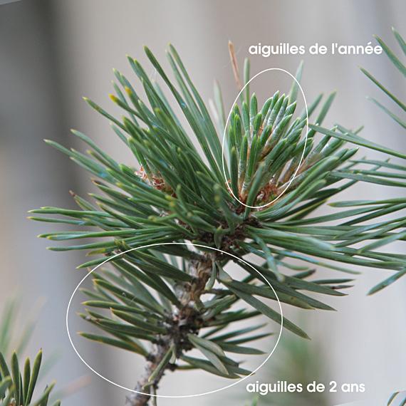http://www.espritsdegoshin.fr/components/com_agora/img/members/81673_aiguilles.jpg