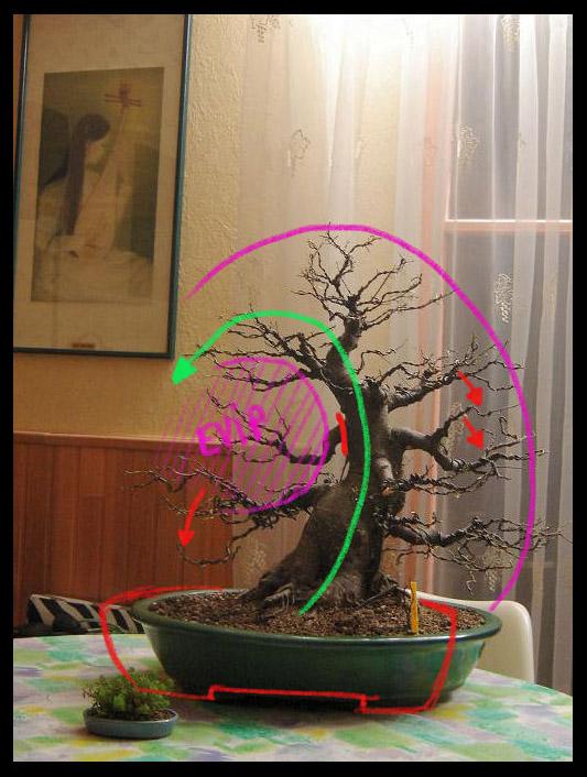 http://www.espritsdegoshin.fr/components/com_agora/img/members/82050_Ficus_edo1.jpg