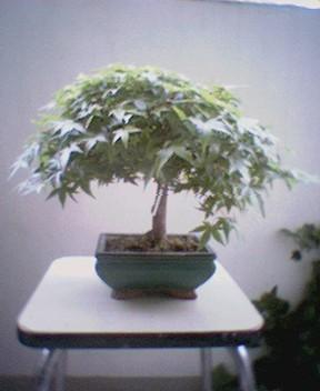 http://www.espritsdegoshin.fr/components/com_agora/img/members/858_06090941-01.jpg