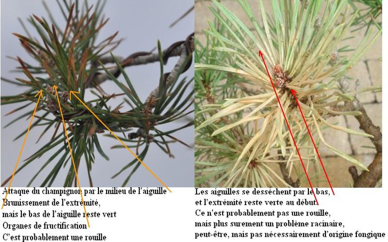 http://www.espritsdegoshin.fr/components/com_agora/img/members/86783_c16f823585ab1d54c2341e0cfa7b68ff910de068