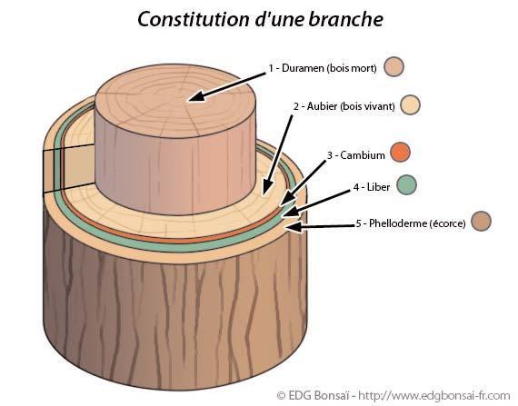 La marcotte de a z - Comment faire crever un arbre sans le couper ...