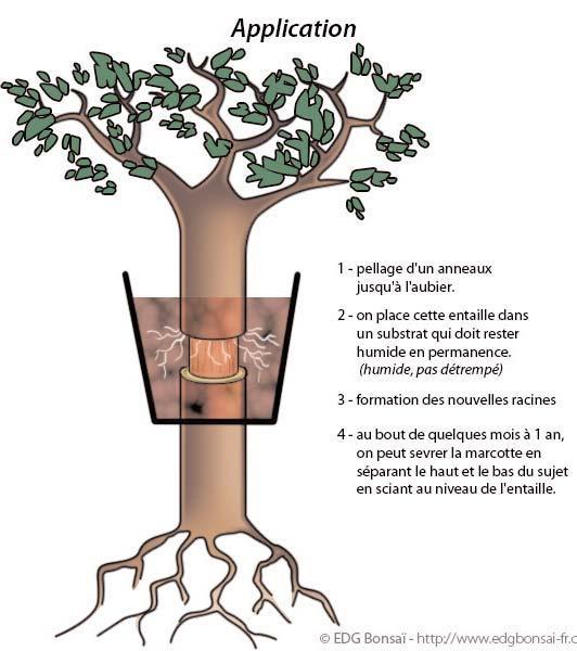 Substrat pour bonsai - Comment faire un bonsai ...