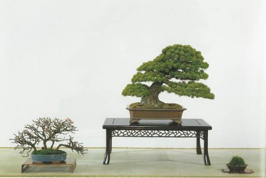 shitakusa